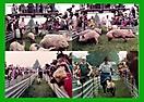 1984 - Schweinerennen - 1987 in Seebenisch